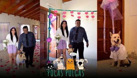 Se casaron y vistieron a su perro con traje para que fuera testigo en la ceremonia