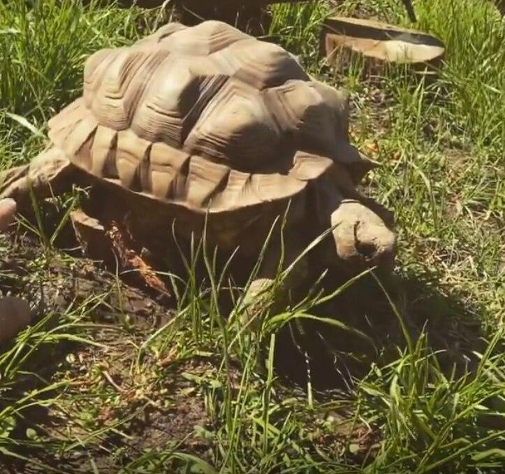 """lejos-de-la-actuacion,-federico-amador-les-dedica-su-tiempo-a-los-animales:-es-""""kinesiologo""""-de-tortugas"""