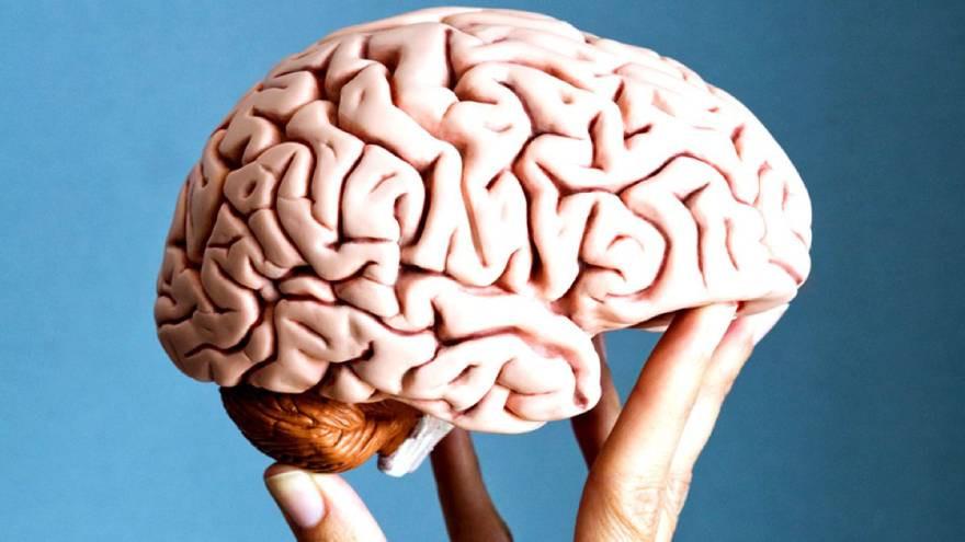 """esta-empresa-tecnologica-quiere-""""copiar-y-pegar""""-datos-del-cerebro-en-chips"""